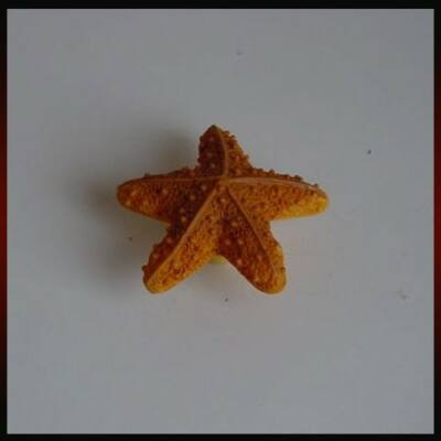 Fogantyú H 023-55 Tengeri csillag Barna